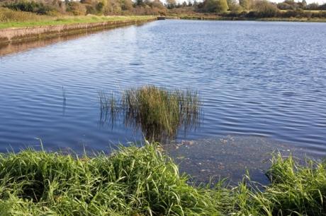 Coolree, Clonard, Co. Wexford, Ireland