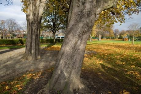 Herbert Park, Dublin, Co. Dublin, Ireland, November 2008