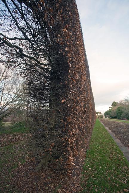 Royal Botanic Garden, Edinburgh, Scotland, February 2012