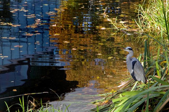 Percy Place, Grand Canal, Dublin, Ireland, November 2019 © Tom O'Connor 2019