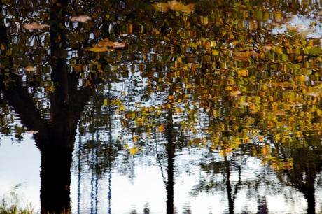 Portobello, Grand Canal, Dublin, Ireland, November 2019 © Tom O'Connor 2019